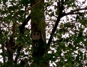 One of a number of bird boxes installed around the Tilbury Green Power Plant to promote biodiversity